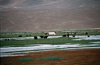 Grass, yaks and dust dance in the mountains